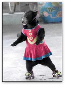 bear_skate (15k image)